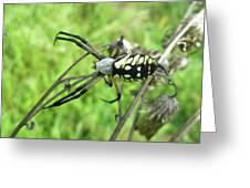 Fall Meadow Spider - Argiope Aurantia Greeting Card