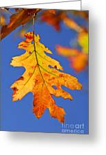 Fall Oak Leaf Greeting Card