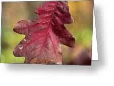 Fall Oak Leaf Greeting Card