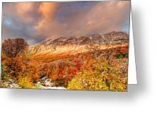 Fall On Display Greeting Card