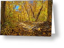 Fall On The Forest Floor Greeting Card
