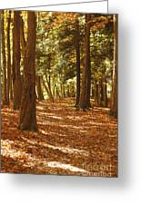 Fall Pathway Greeting Card