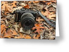 Fall Photography Greeting Card