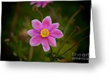 Fall Pink Daisy Greeting Card