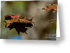 Fall Puddle Greeting Card