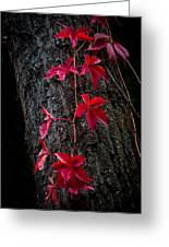 Fall Red Greeting Card