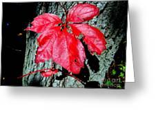 Fall Red Leaf Greeting Card