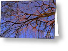Fall Reflections By Diana Sainz Greeting Card