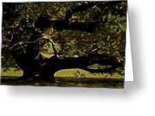 Fall Rising Greeting Card by Odd Jeppesen