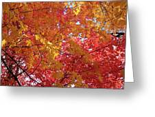 Fall Saint Louis 1 Greeting Card