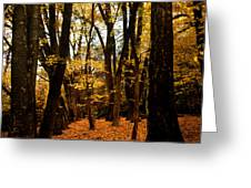 Fall Scene In Bidwell Park Greeting Card