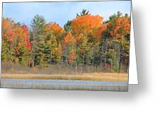 Fall Splender Greeting Card by Rhonda Humphreys