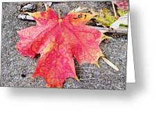 Fall St. Louis 7 Greeting Card