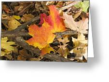 Fall Greeting Card by Steven Ralser