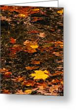 Fall Stream Bed Greeting Card