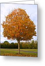 Fall Sugar Maple Greeting Card