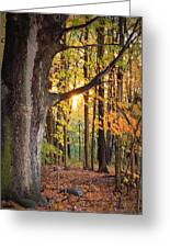 Fall Sunset Greeting Card by Jennifer  King