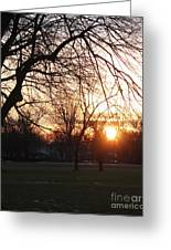 Fall Sunset Tree Silhouettes Greeting Card