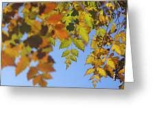 Fall Time Greeting Card