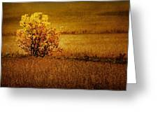 Fall Tree And Field #2 Greeting Card