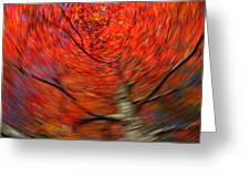 Fall Tree Carousel Greeting Card by Juergen Roth