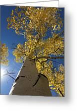 Fall Tree Greeting Card by David Yack