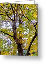 Fall Tree Greeting Card by Baywest Imaging