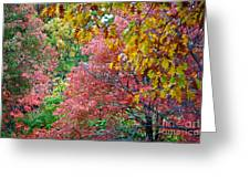 Fall Tree Leaves Greeting Card
