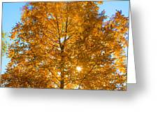 Fall Tree Greeting Card by Parker Cunningham