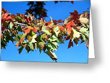 Fall Tree Greeting Card