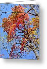 Fall Trees 2 Of Wnc Greeting Card