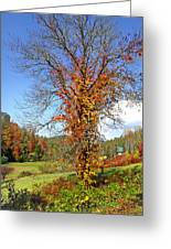 Fall Trees 5 Of Wnc Greeting Card