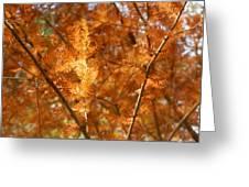 Fall Trees II Greeting Card