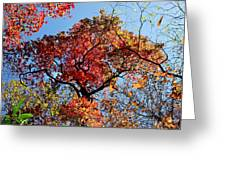 Fall Trees Of Wnc Greeting Card