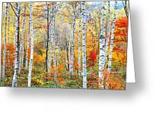 Fall Trees, Shinhodaka, Gifu, Japan Greeting Card