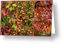 Fall Trio Collage Greeting Card