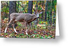 Fall Trophy Buck Greeting Card