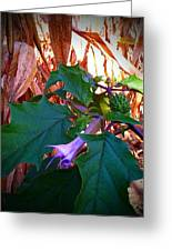 Fall Wild Flower Purple Bloom Greeting Card by Brittany Perez