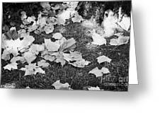 Fallen Acer Maple Leaves On Ground Autumn Fall Celebration Florida Usa Greeting Card
