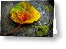 Fallen Autumn Aspen Leaf Greeting Card