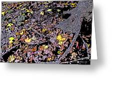 Fallen Autumn Leaves Among The Roots Greeting Card
