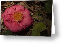 Fallen Beauty Greeting Card