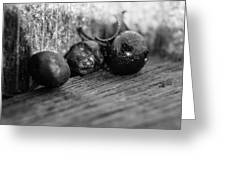 Fallen Berries Greeting Card