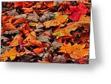 Fallen Colors Greeting Card