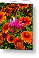 Fallen Coneflower Greeting Card