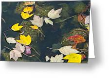 Fallen Leaves 2 Greeting Card
