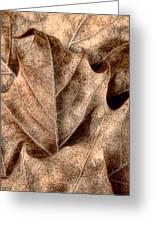 Fallen Leaves I Greeting Card