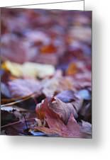 Fallen Leaves Road Greeting Card by Irina Wardas