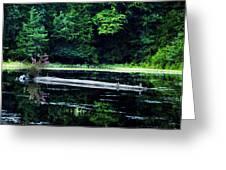 Fallen Log In A Lake Greeting Card