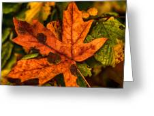 Fallen Maple Leave Greeting Card